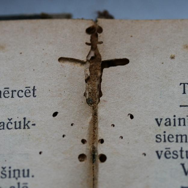 Kukaiņi 2