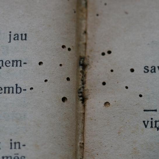 Kukaiņi 3