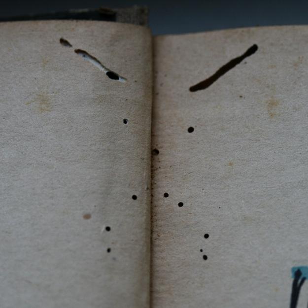 Kukaiņi 4